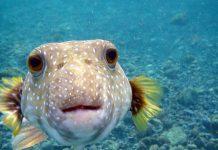 испорченая рыба